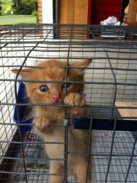 Убегающие из клетки котики набирают просмотры в Сети